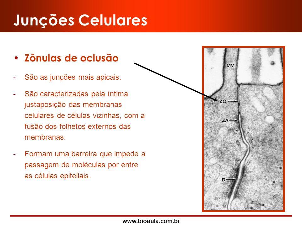 www.bioaula.com.br Zônulas de Oclusão (ZO) Zônulas de Adesão (ZA) Desmossomos (D) Junções Comunicantes (JC) Junções Celulares