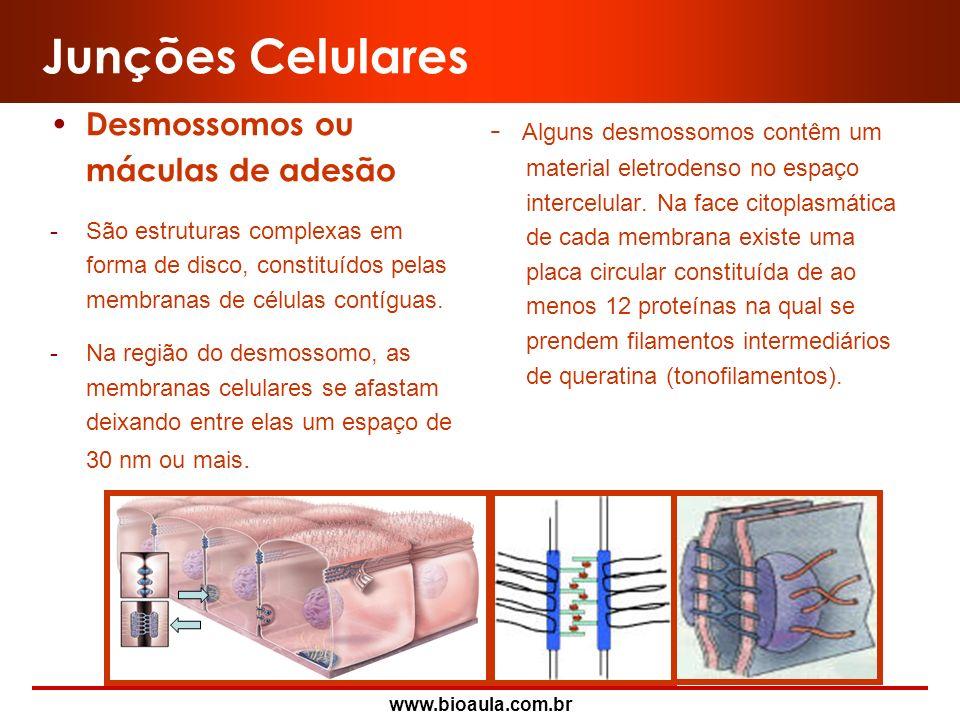 www.bioaula.com.br Junções Celulares Junções comunicantes ou gap junctions ou néxus -Caracterizam-se pela aposição das membranas de células adjacentes