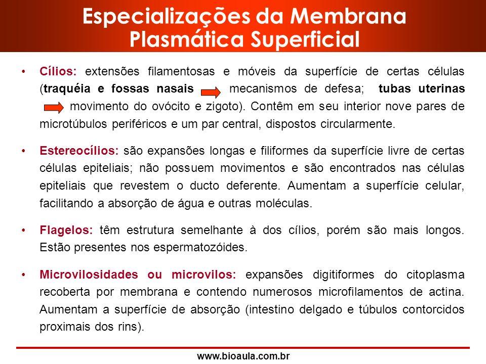 www.bioaula.com.br Hemidesmossomos -Morfologicamente, estas estruturas têm o aspecto de meio desmossomo, localizado na membrana da célula epitelial. -
