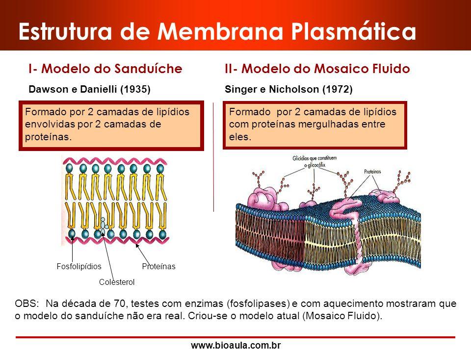 www.bioaula.com.br Membrana Plasmática Bicamada lipídica. 7,5 a 10 nm (não visíveis ao Microscópio Óptico) Constituída por dois folhetos: interno e ex