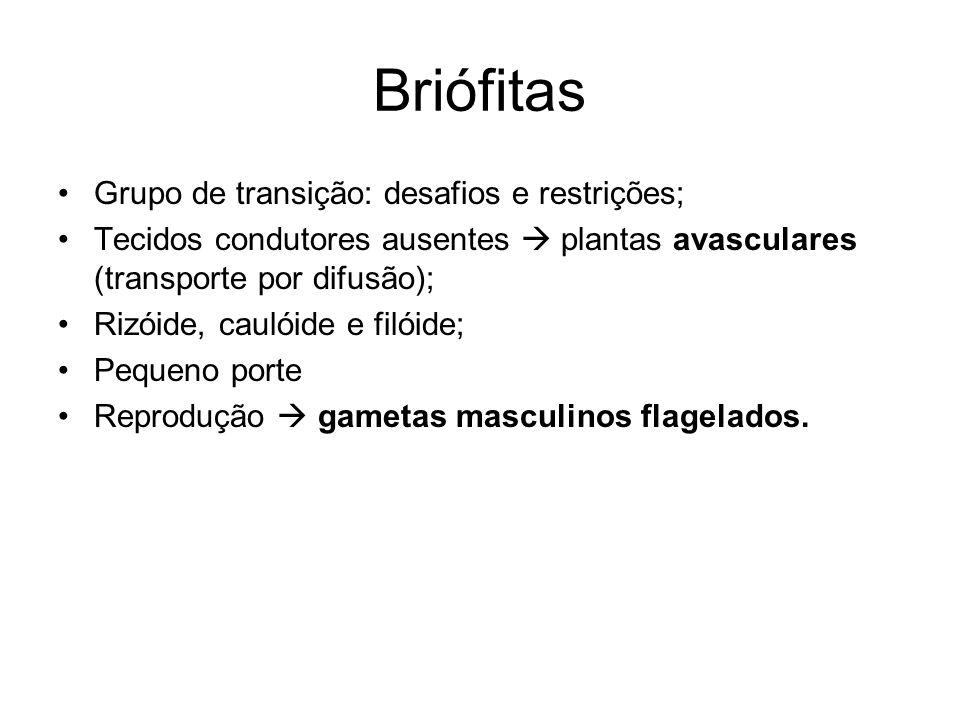 Briófitas Grupo de transição: desafios e restrições; Tecidos condutores ausentes plantas avasculares (transporte por difusão); Rizóide, caulóide e fil