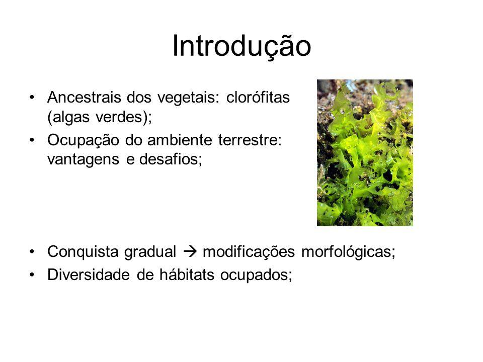 Introdução Ancestrais dos vegetais: clorófitas (algas verdes); Ocupação do ambiente terrestre: vantagens e desafios; Conquista gradual modificações mo