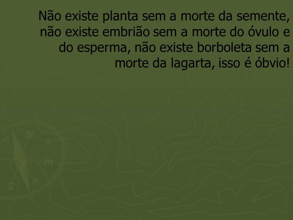 Não existe planta sem a morte da semente, não existe embrião sem a morte do óvulo e do esperma, não existe borboleta sem a morte da lagarta, isso é ób