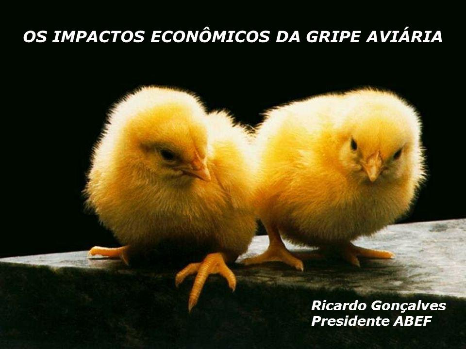 OS IMPACTOS ECONÔMICOS DA GRIPE AVIÁRIA Ricardo Gonçalves Presidente ABEF