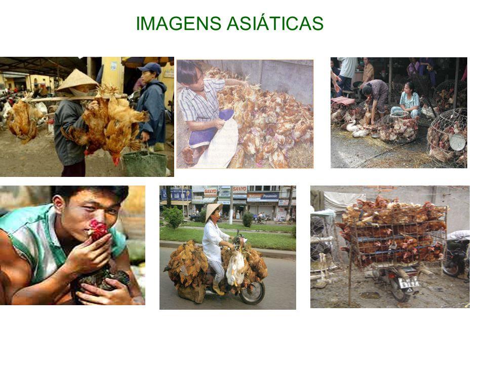 IMAGENS ASIÁTICAS