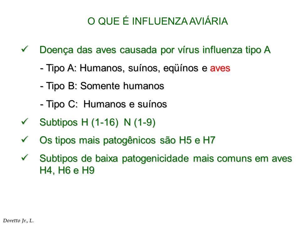 Doença das aves causada por vírus influenza tipo A Doença das aves causada por vírus influenza tipo A - Tipo A: Humanos, suínos, eqüínos e aves - Tipo