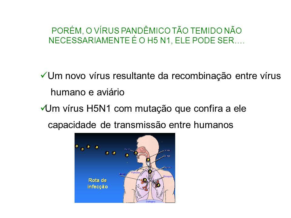Um novo vírus resultante da recombinação entre vírus humano e aviário Um vírus H5N1 com mutação que confira a ele capacidade de transmissão entre huma