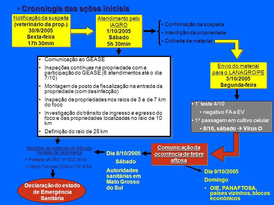Medidas de restrição do trânsito na área de segurança Portaria IAGRO n o 932, 8/10 Ofício Circular DSA n o 70, 9/10 Comunicação ao GEASE Inspeções contínuas na propriedade com a participação do GEASE (6 atendimentos até o dia 7/10) Montagem de posto de fiscalização na entrada da propriedade (com desinfecção) Inspeção de propriedades nos raios de 3 e de 7 km do foco Investigação do trânsito de ingresso e egresso do foco e das propriedades localizadas no raio de 10 km Definição do raio de 25 km Comunicação ao GEASE Inspeções contínuas na propriedade com a participação do GEASE (6 atendimentos até o dia 7/10) Montagem de posto de fiscalização na entrada da propriedade (com desinfecção) Inspeção de propriedades nos raios de 3 e de 7 km do foco Investigação do trânsito de ingresso e egresso do foco e das propriedades localizadas no raio de 10 km Definição do raio de 25 km Cronologia das ações iniciais Cronologia das ações iniciais Atendimento pelo IAGRO 1/10/2005 Sábado 5h 30min Atendimento pelo IAGRO 1/10/2005 Sábado 5h 30min Confirmação da suspeita Interdição da propriedade Colheita de material 1 º teste 4/10 negativo FA e EV 1 a passagem em cultivo celular 8/10, sábado Vírus O Dia 9/10/2005 Domingo OIE, PANAFTOSA, países vizinhos, blocos econônicos Dia 8/10/2005 Sábado Autoridades sanitárias em Mato Grosso do Sul Declaração do estado de Emergência Sanitária Envio do material para o LANAGRO/PE 3/10/2005 Segunda-feira Envio do material para o LANAGRO/PE 3/10/2005 Segunda-feira Comunicação da ocorrência de febre aftosa Notificação da suspeita (veterinário da prop.) 30/9/2005 Sexta-feira 17h 30min Notificação da suspeita (veterinário da prop.) 30/9/2005 Sexta-feira 17h 30min
