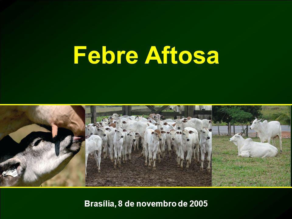 Febre Aftosa Brasília, 8 de novembro de 2005