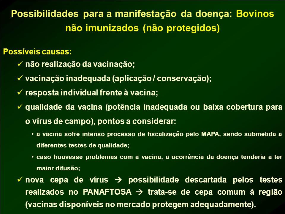 Possibilidades para a manifestação da doença: Bovinos não imunizados (não protegidos) Possíveis causas: não realização da vacinação; vacinação inadequ