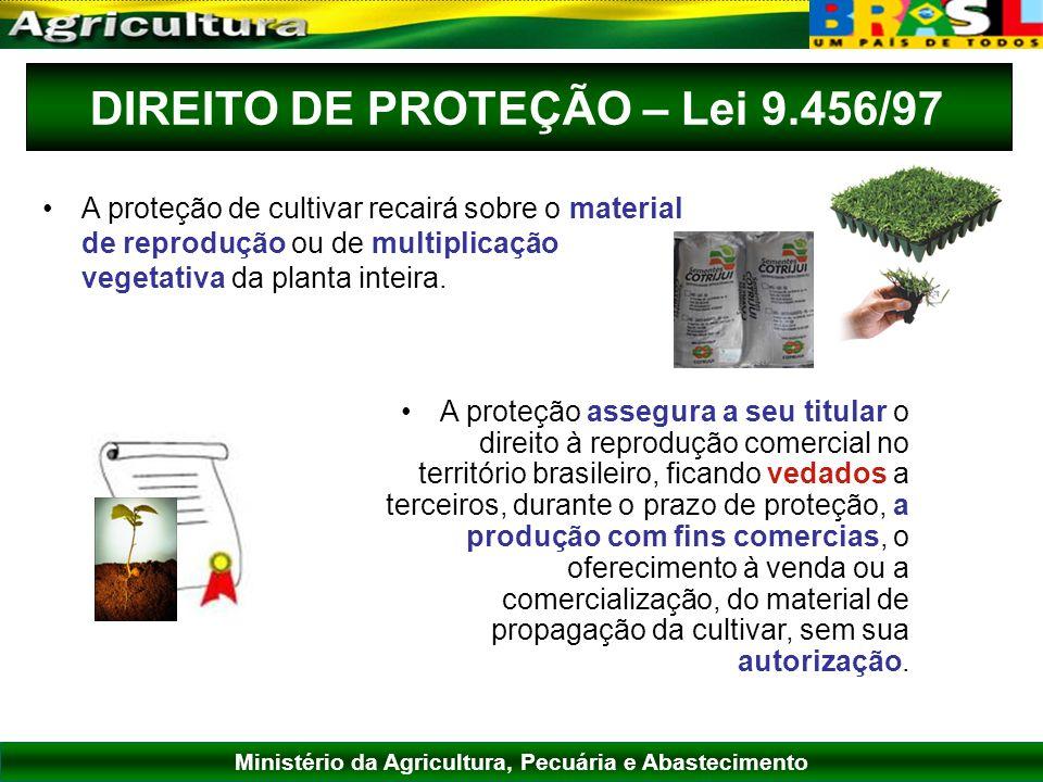 Ministério da Agricultura, Pecuária e Abastecimento DIREITO DE PROTEÇÃO – Lei 9.456/97 A proteção assegura a seu titular o direito à reprodução comerc