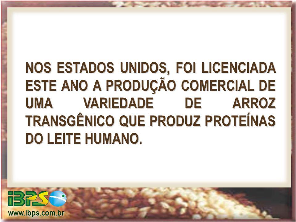 www.ibps.com.br NOS ESTADOS UNIDOS, FOI LICENCIADA ESTE ANO A PRODUÇÃO COMERCIAL DE UMA VARIEDADE DE ARROZ TRANSGÊNICO QUE PRODUZ PROTEÍNAS DO LEITE HUMANO.