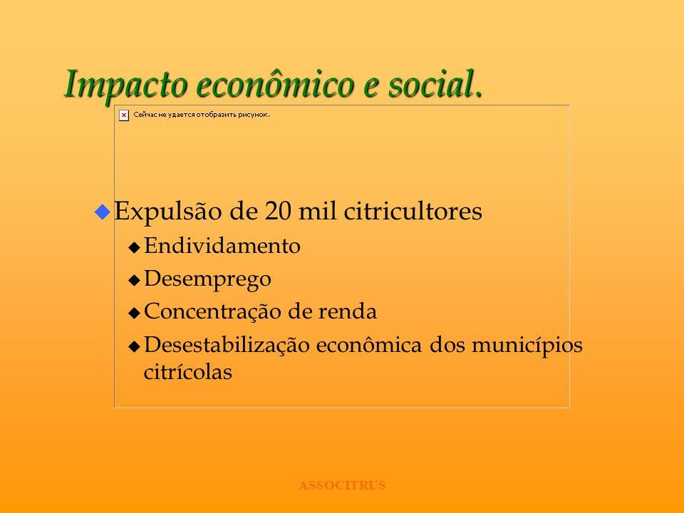 ASSOCITRUS Impacto econômico e social. u Expulsão de 20 mil citricultores u Endividamento u Desemprego u Concentração de renda u Desestabilização econ