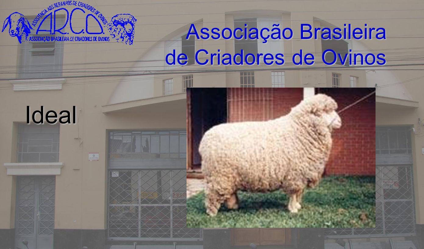 Associação Brasileira de Criadores de Ovinos Ideal