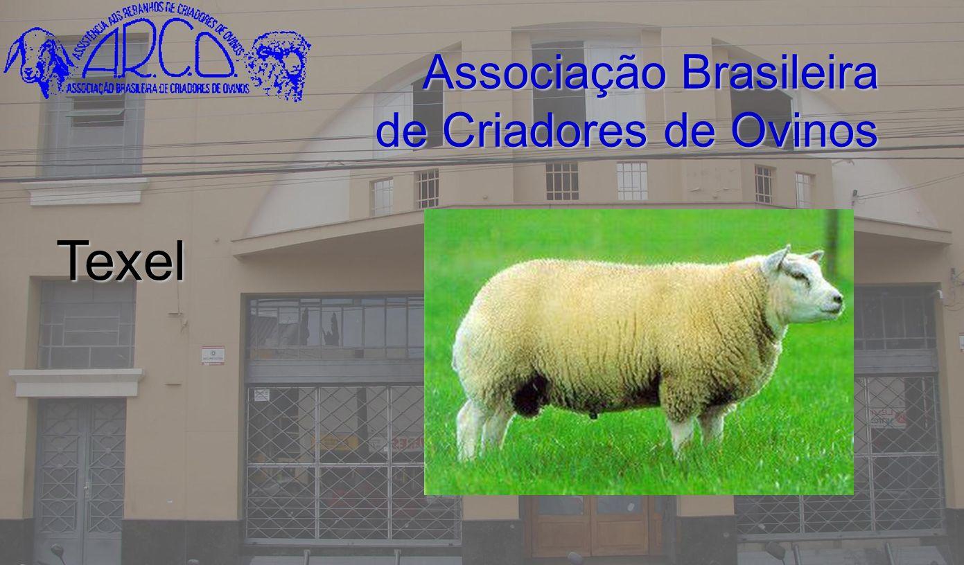 Associação Brasileira de Criadores de Ovinos Texel