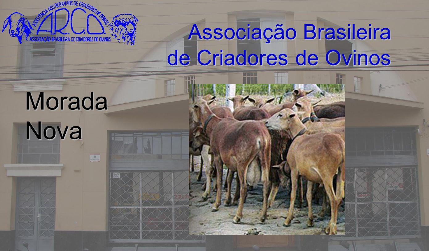 Associação Brasileira de Criadores de Ovinos Morada Nova