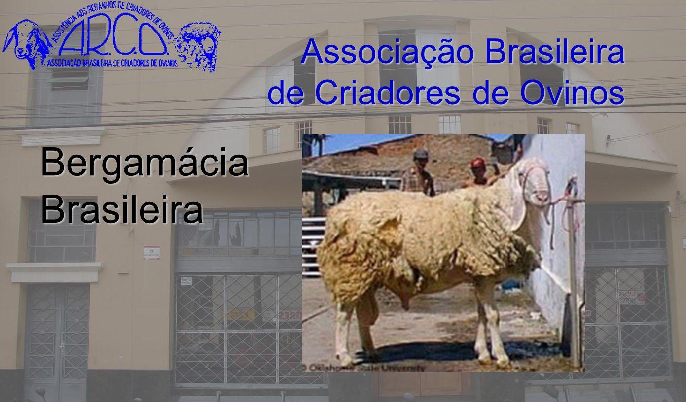 Associação Brasileira de Criadores de Ovinos Bergamácia Brasileira
