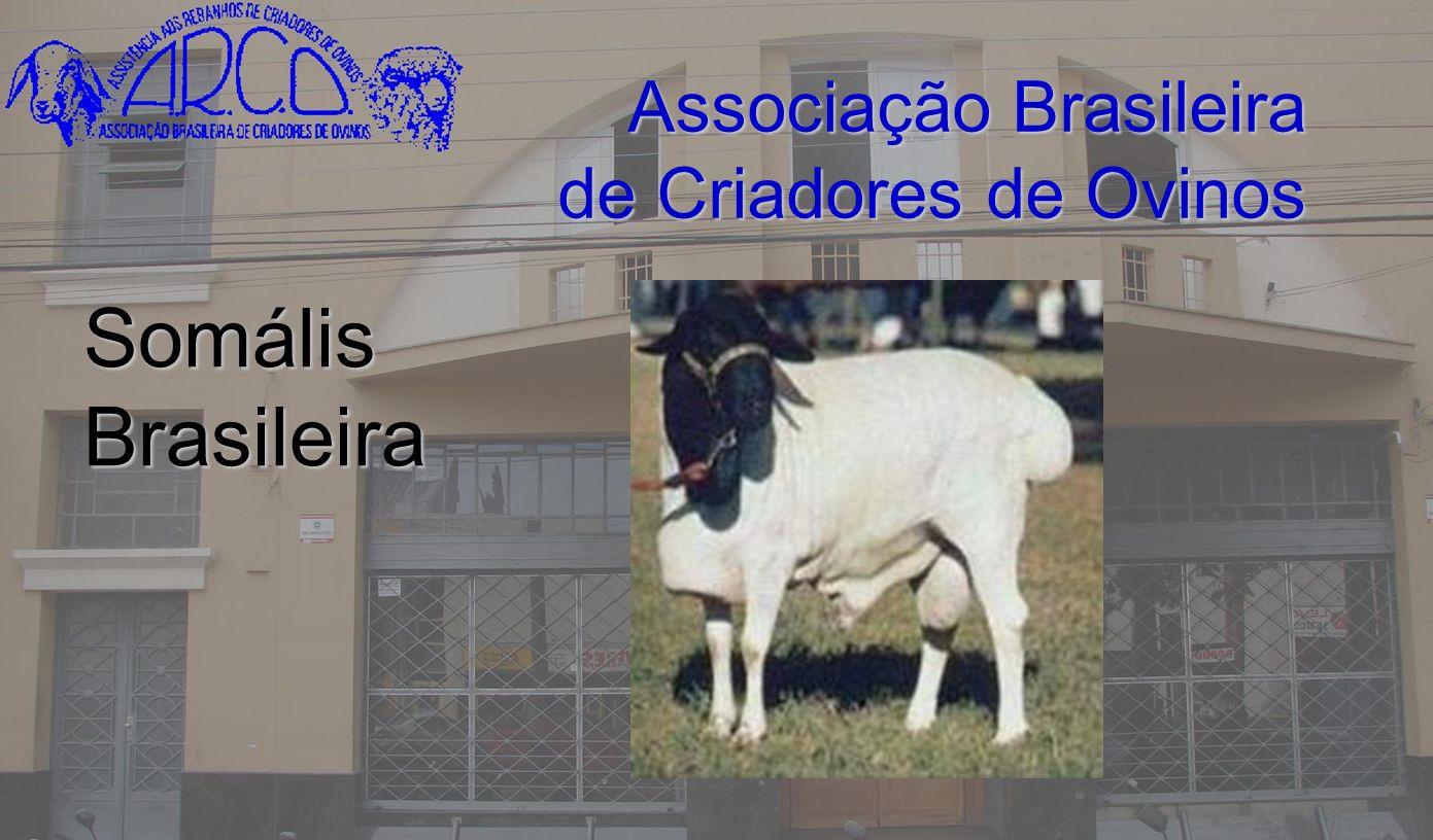 Associação Brasileira de Criadores de Ovinos Somális Brasileira