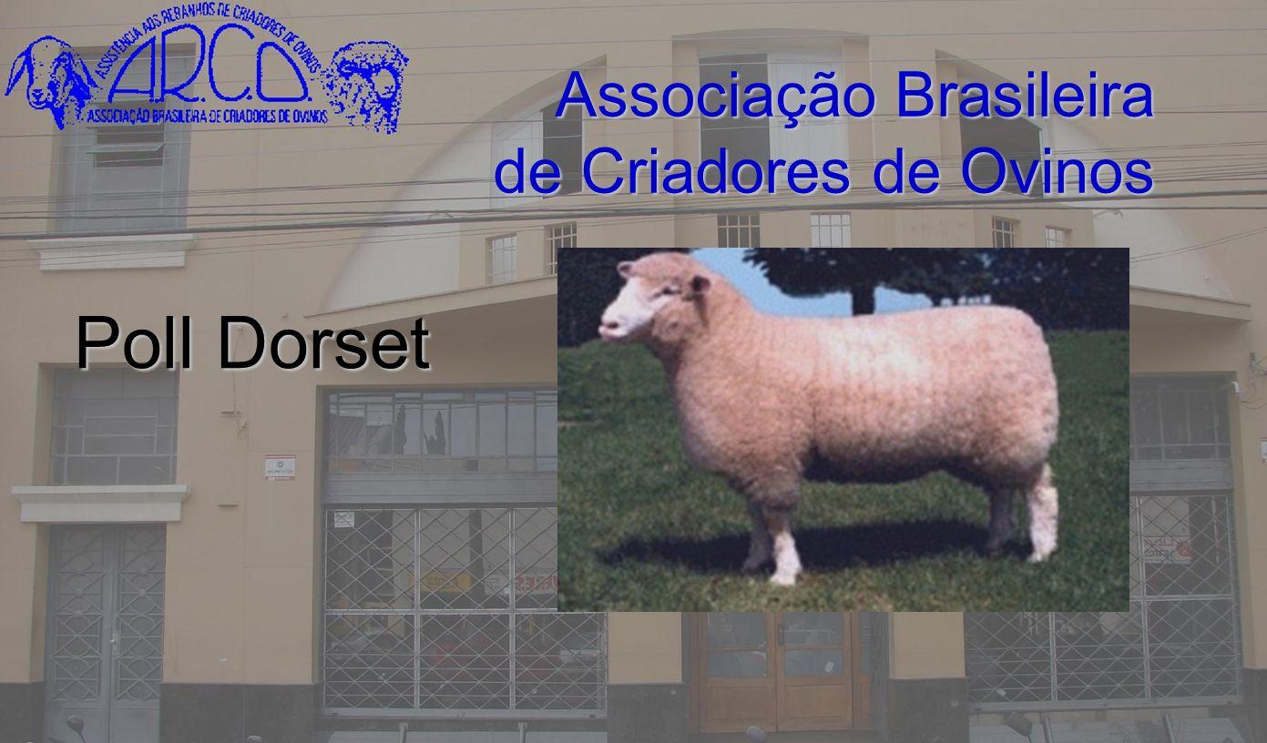 Associação Brasileira de Criadores de Ovinos Poll Dorset