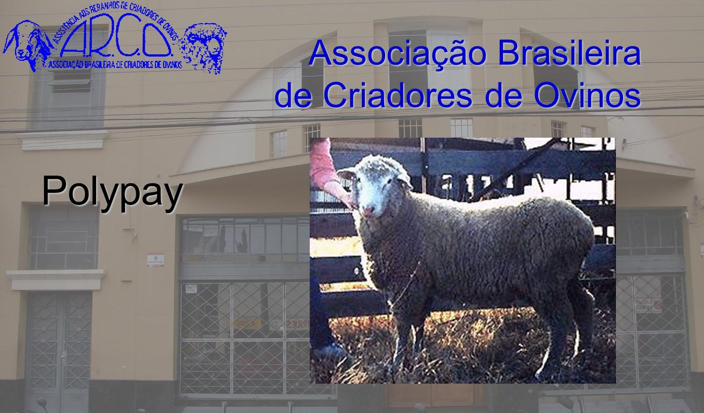 Associação Brasileira de Criadores de Ovinos Polypay