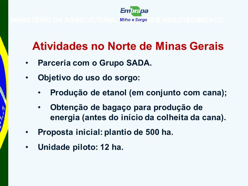 MINISTÉRIO DA AGRICULTURA, PECUÁRIA E ABASTECIMENTO Atividades no Norte de Minas Gerais Parceria com o Grupo SADA.