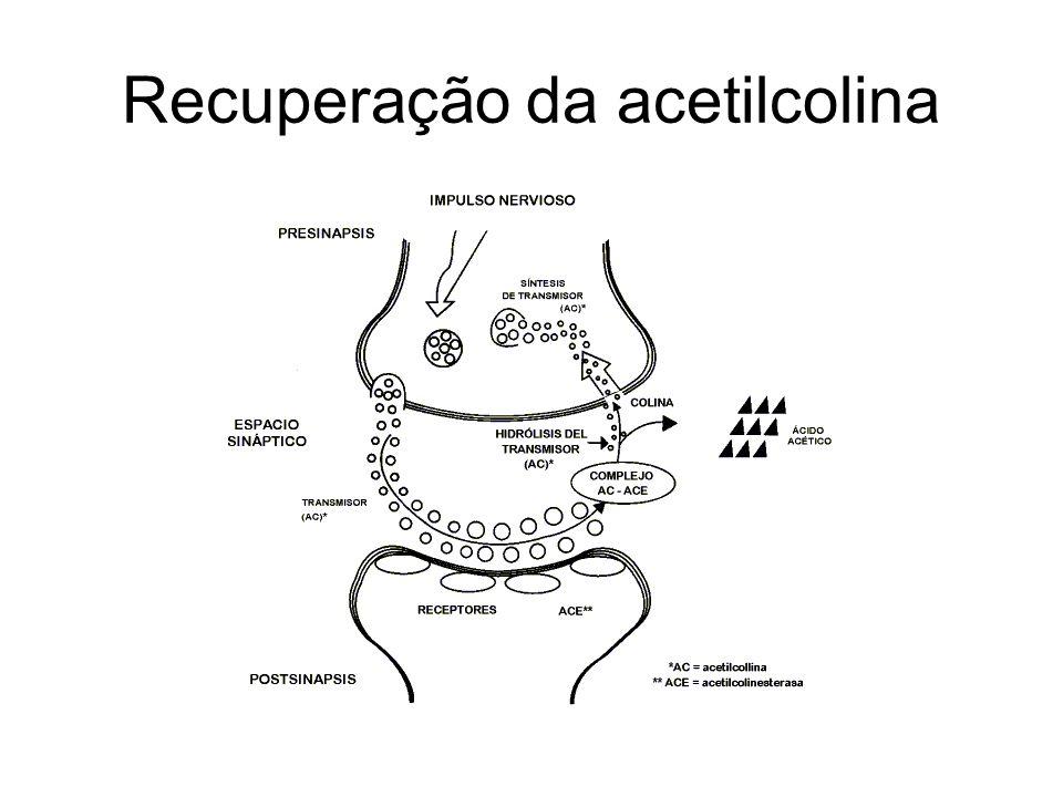Recuperação da acetilcolina