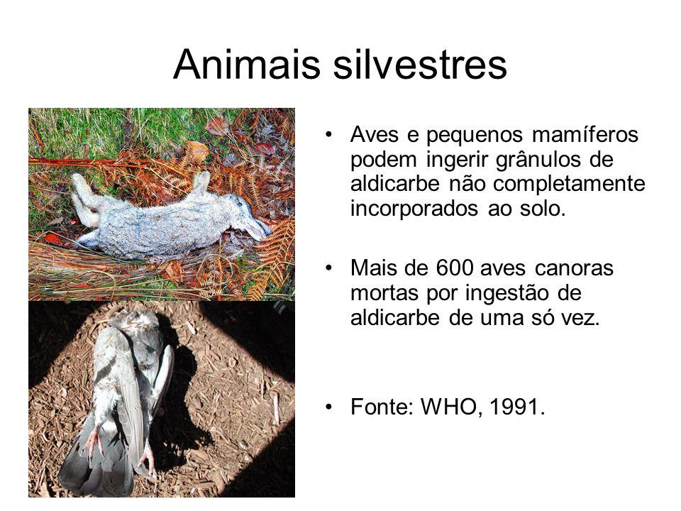Animais silvestres Aves e pequenos mamíferos podem ingerir grânulos de aldicarbe não completamente incorporados ao solo. Mais de 600 aves canoras mort