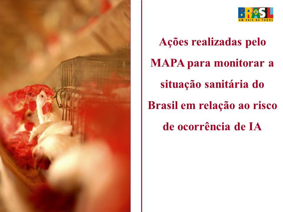 Ações realizadas pelo MAPA para monitorar a situação sanitária do Brasil em relação ao risco de ocorrência de IA