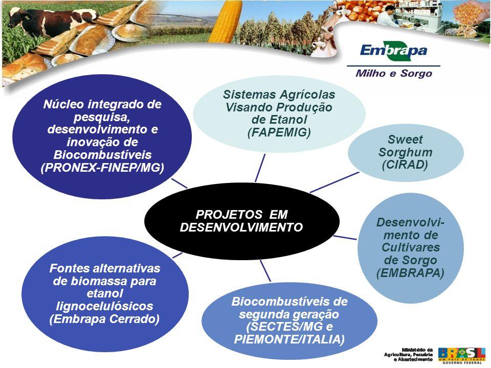 PROJETOS EM DESENVOLVIMENTO Sistemas Agrícolas Visando Produção de Etanol (FAPEMIG) Sweet Sorghum (CIRAD) Desenvolvi- mento de Cultivares de Sorgo (EM