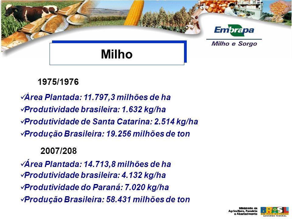 Área Plantada: 11.797,3 milhões de ha Produtividade brasileira: 1.632 kg/ha Produtividade de Santa Catarina: 2.514 kg/ha Produção Brasileira: 19.256 m