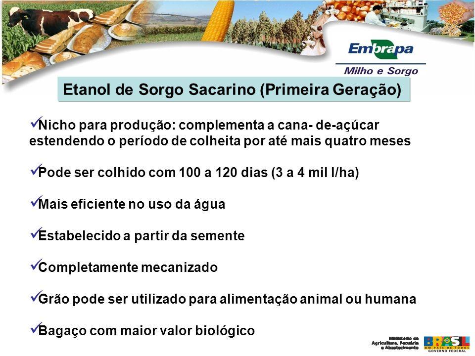 Etanol de Sorgo Sacarino (Primeira Geração) No fim da década de 1970 - Pro-Alcool - um forte incentivo para desenvolver tecnologias para micro-destilarias e mini- destilarias A Embrapa desenvolveu o programa de melhoramento de Sorgo Sacarino para fornecer matéria-prima para estas destilarias (1975 – 1985) Retomada das pesquisas em 2007/2008