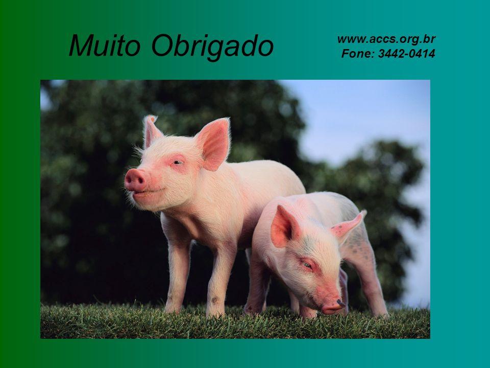 Muito Obrigado www.accs.org.br Fone: 3442-0414