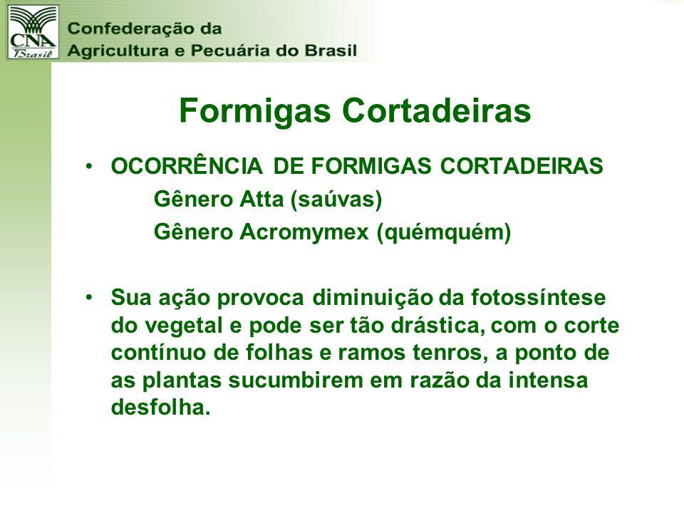 Formigas Cortadeiras OCORRÊNCIA DE FORMIGAS CORTADEIRAS Gênero Atta (saúvas) Gênero Acromymex (quémquém) Sua ação provoca diminuição da fotossíntese d