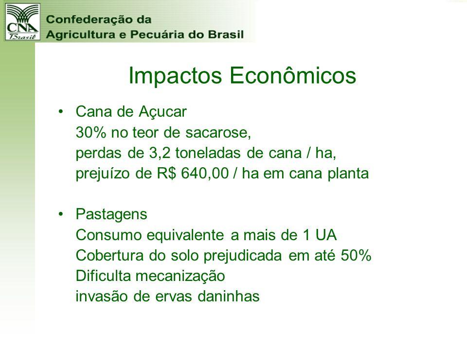 Impactos Econômicos Cana de Açucar 30% no teor de sacarose, perdas de 3,2 toneladas de cana / ha, prejuízo de R$ 640,00 / ha em cana planta Pastagens