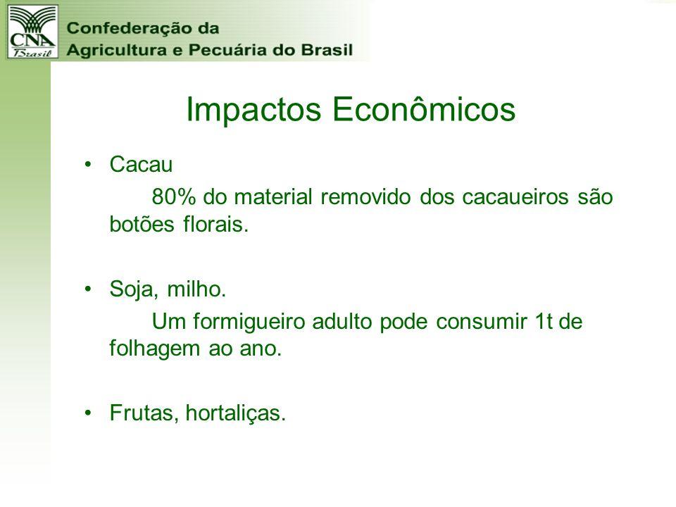 Impactos Econômicos Cacau 80% do material removido dos cacaueiros são botões florais. Soja, milho. Um formigueiro adulto pode consumir 1t de folhagem