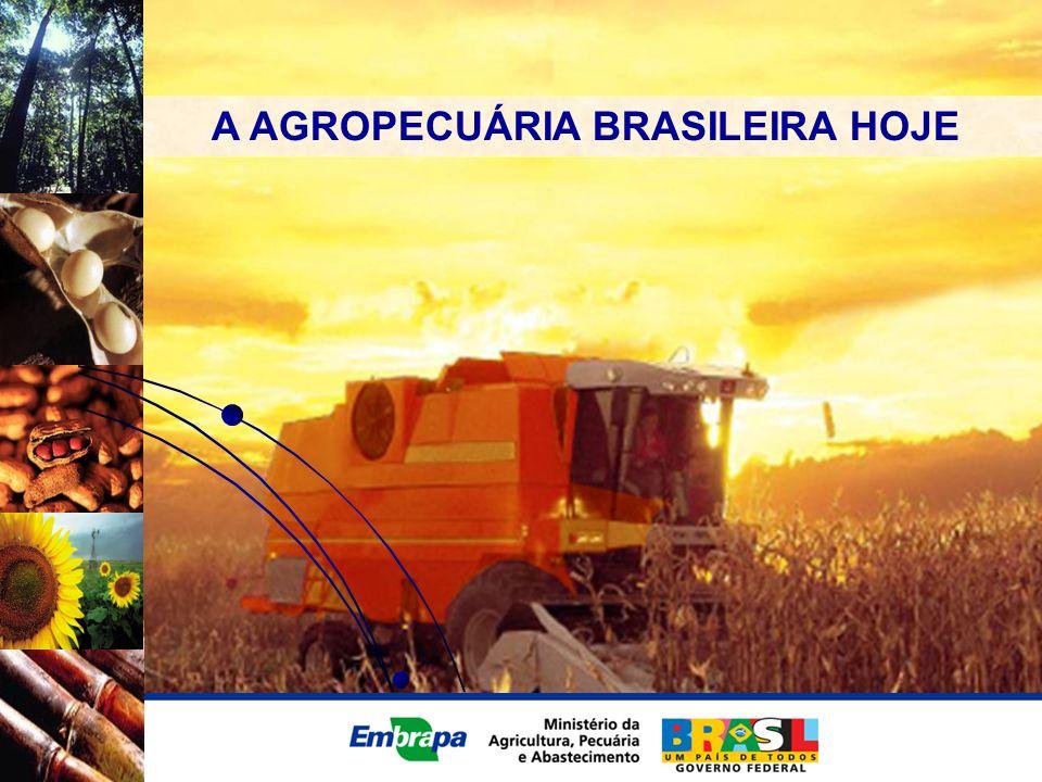 A AGROPECUÁRIA BRASILEIRA HOJE