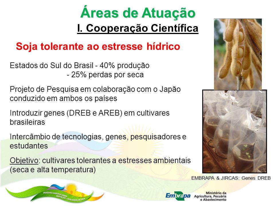 Áreas de Atuação I. Cooperação Científica Soja tolerante ao estresse hídrico Estados do Sul do Brasil - 40% produção - 25% perdas por seca Projeto de