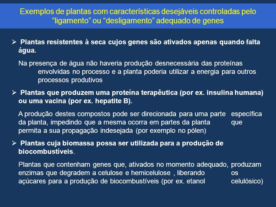 Exemplos de plantas com características desejáveis controladas pelo ligamento ou desligamento adequado de genes Plantas resistentes à seca cujos genes