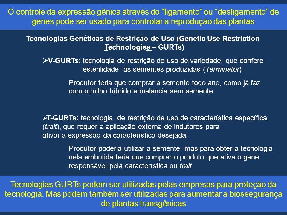 O controle da expressão gênica através do ligamento ou desligamento de genes pode ser usado para controlar a reprodução das plantas Tecnologias Genéticas de Restrição de Uso (Genetic Use Restriction Technologies – GURTs) V-GURTs: tecnologia de restrição de uso de variedade, que confere esterilidade às sementes produzidas (Terminator) Produtor teria que comprar a semente todo ano, como já faz com o milho híbrido e melancia sem semente T-GURTs: tecnologia de restrição de uso de característica específica (trait), que requer a aplicação externa de indutores para ativar a expressão da característica desejada.