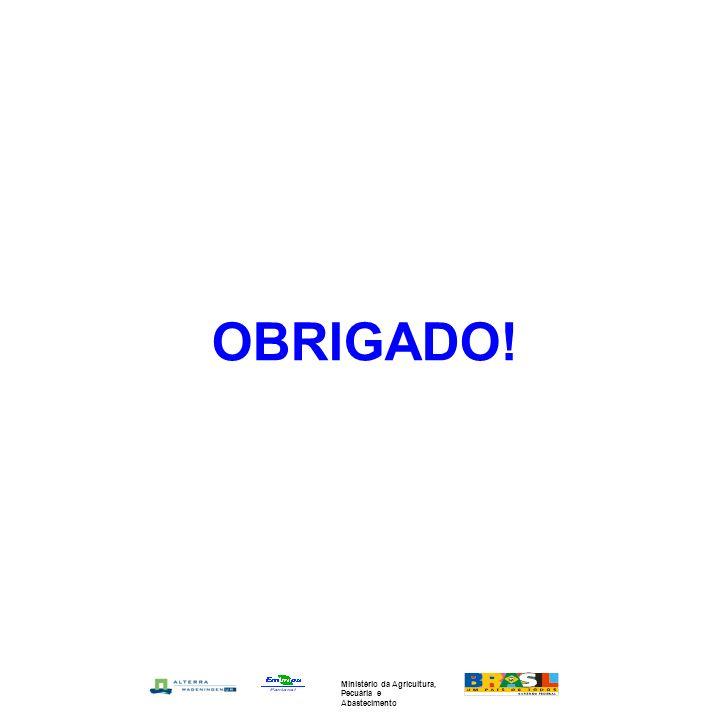 OBRIGADO! Ministério da Agricultura, Pecuária e Abastecimento