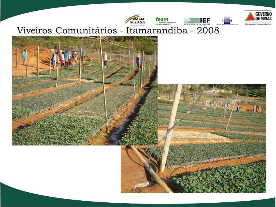 Meta de fomento Social para 2008/2009 11.795 hectares hectares