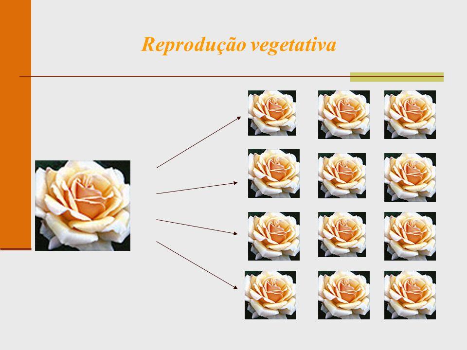Reprodução vegetativa