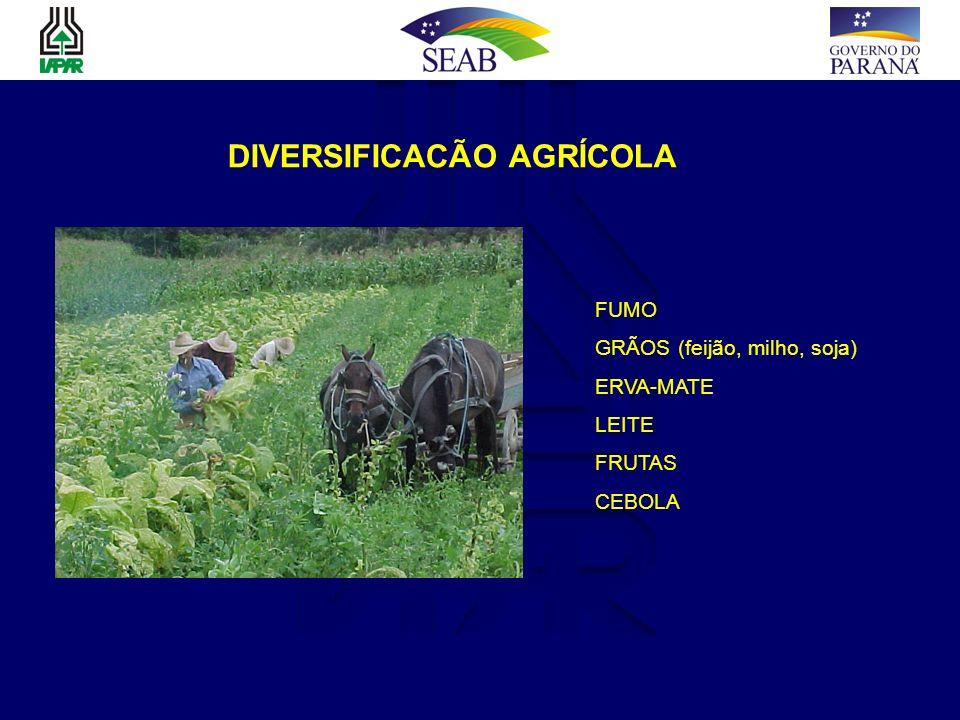 DIVERSIFICACÃO AGRÍCOLA FUMO GRÃOS (feijão, milho, soja) ERVA-MATE LEITE FRUTAS CEBOLA