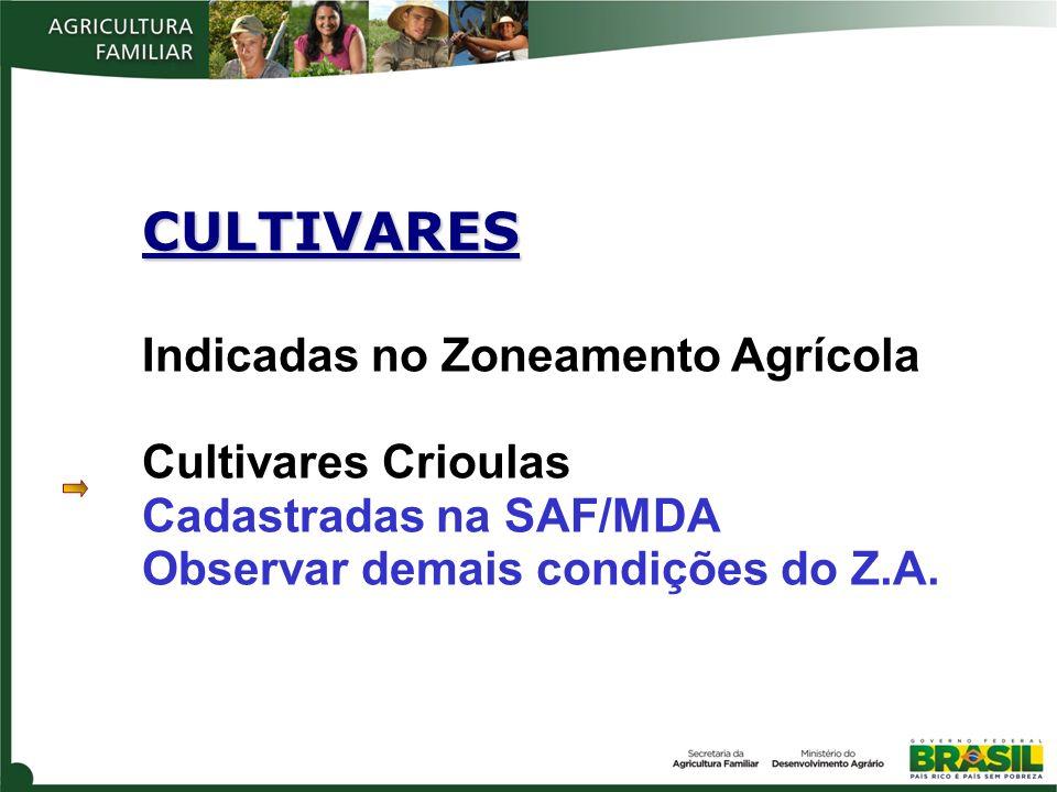 CULTIVARES Indicadas no Zoneamento Agrícola Cultivares Crioulas Cadastradas na SAF/MDA Observar demais condições do Z.A.