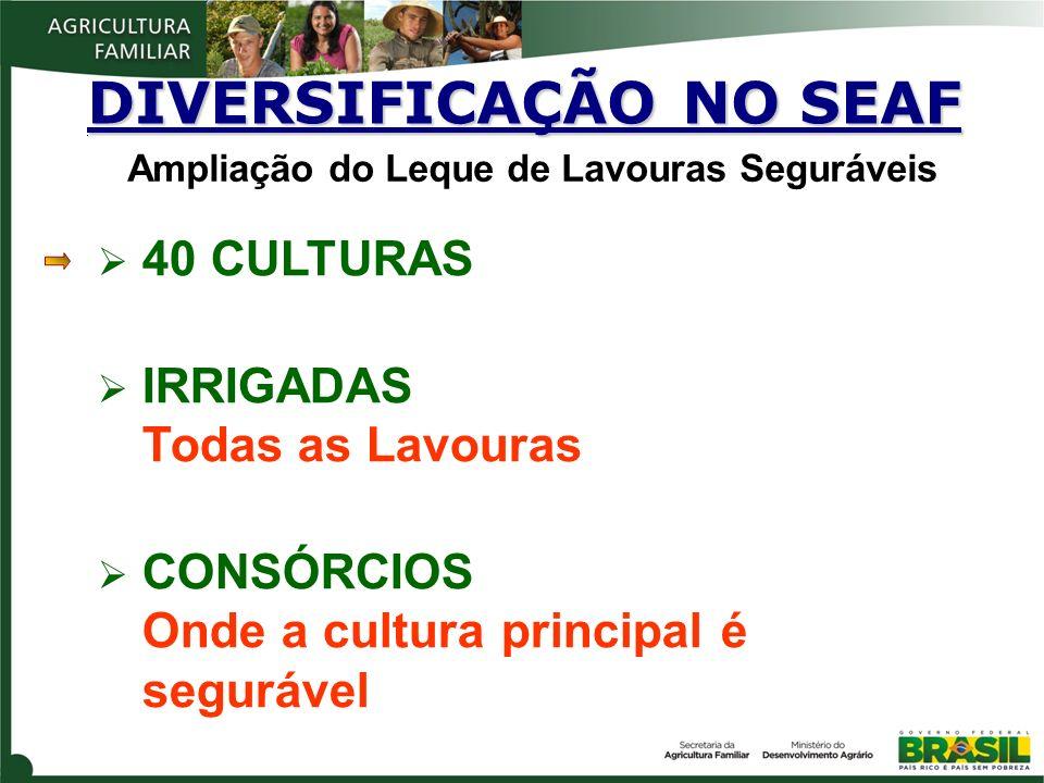 40 CULTURAS IRRIGADAS Todas as Lavouras CONSÓRCIOS Onde a cultura principal é segurável DIVERSIFICAÇÃO NO SEAF. Ampliação do Leque de Lavouras Seguráv