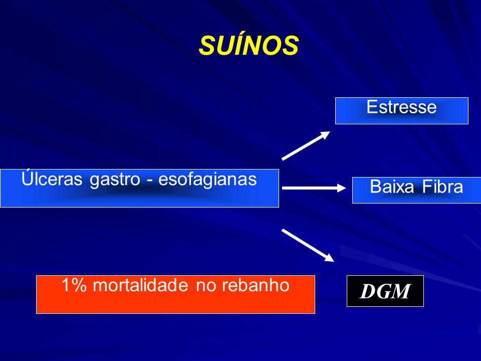 SUÍNOS Úlceras gastro - esofagianas Estresse Baixa Fibra DGM 1% mortalidade no rebanho