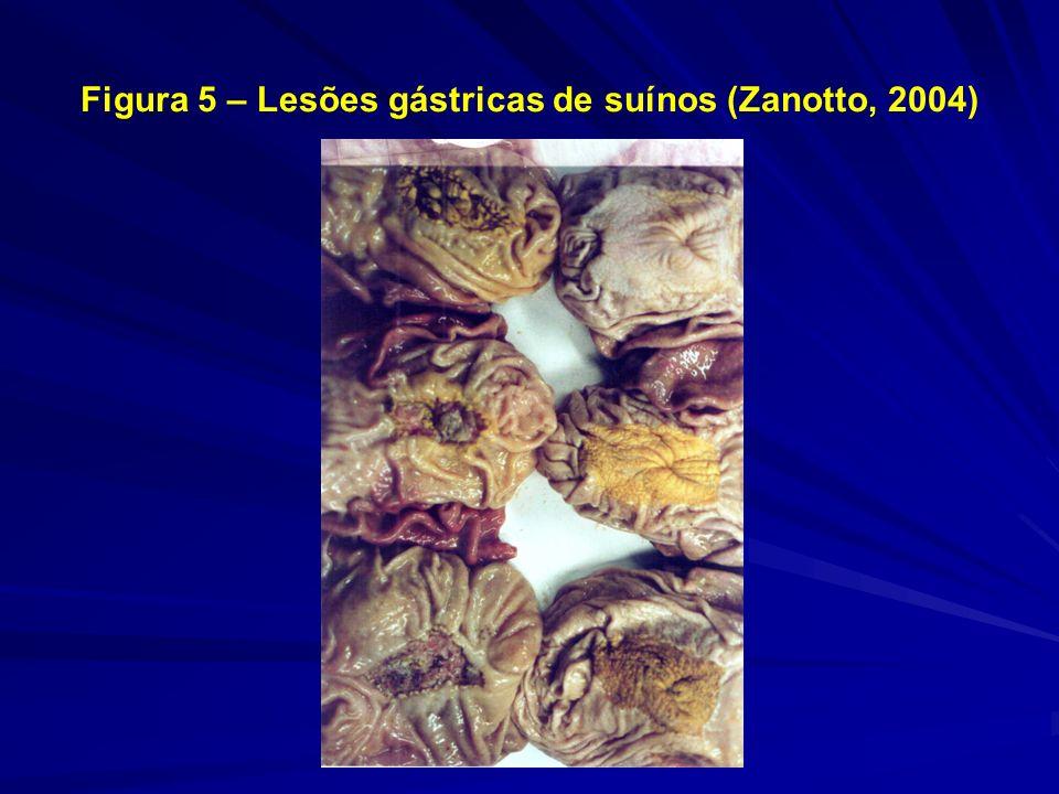 Figura 5 – Lesões gástricas de suínos (Zanotto, 2004)