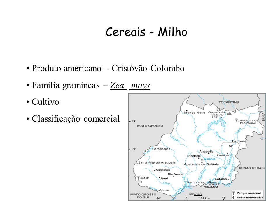 Cereais - Milho Produto americano – Cristóvão Colombo Família gramíneas – Zea mays Cultivo Classificação comercial