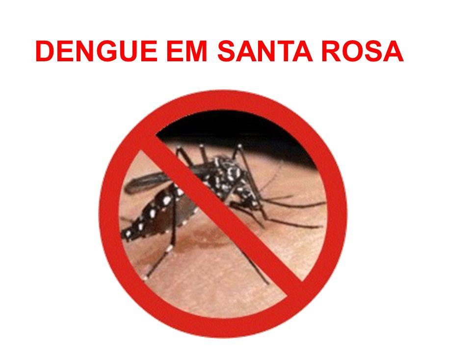 DENGUE EM SANTA ROSA