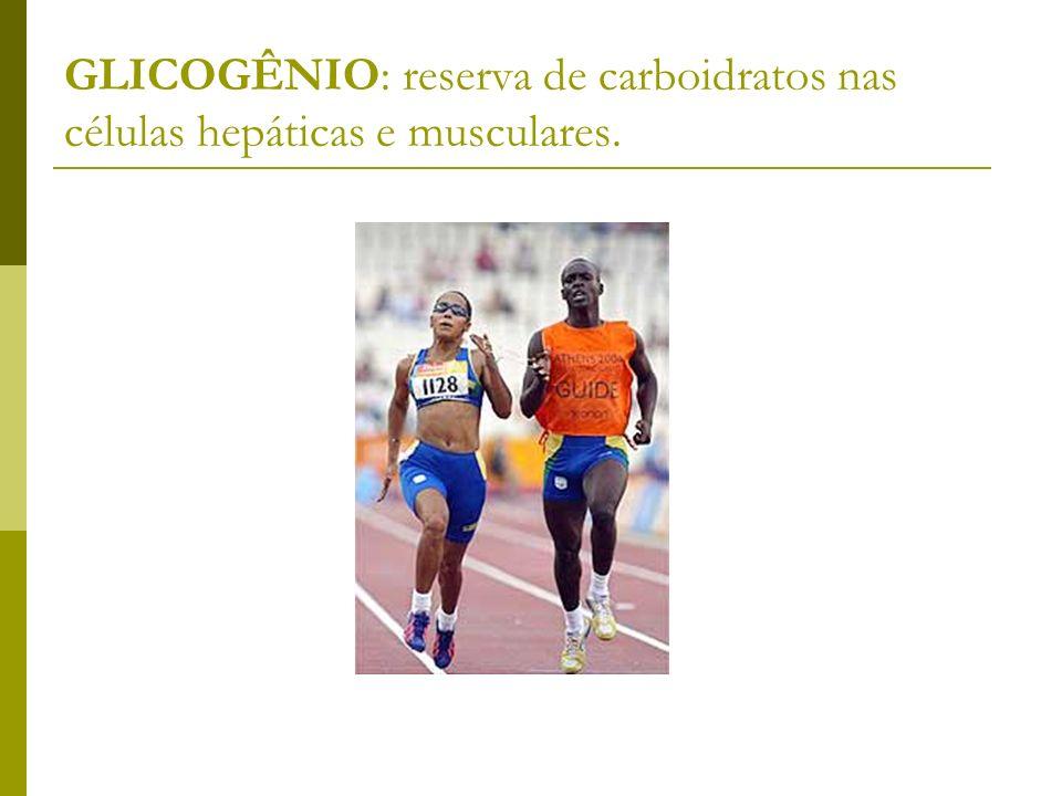 GLICOGÊNIO: reserva de carboidratos nas células hepáticas e musculares.